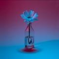 TChambers-Blue-Daisy-4108-sq-e