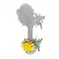 TChambers-Carnation-Tree-1641-e