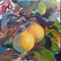 Ventura-Lemons (2)